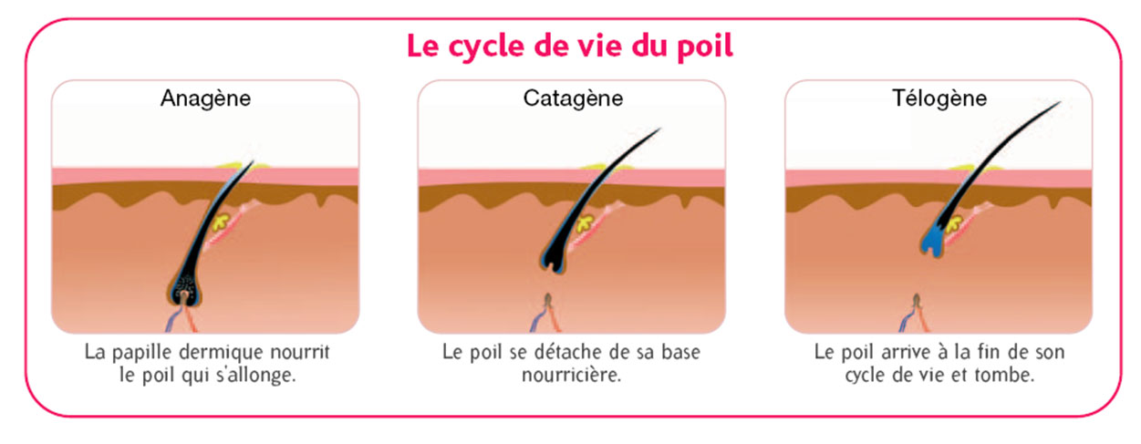 cycle poil